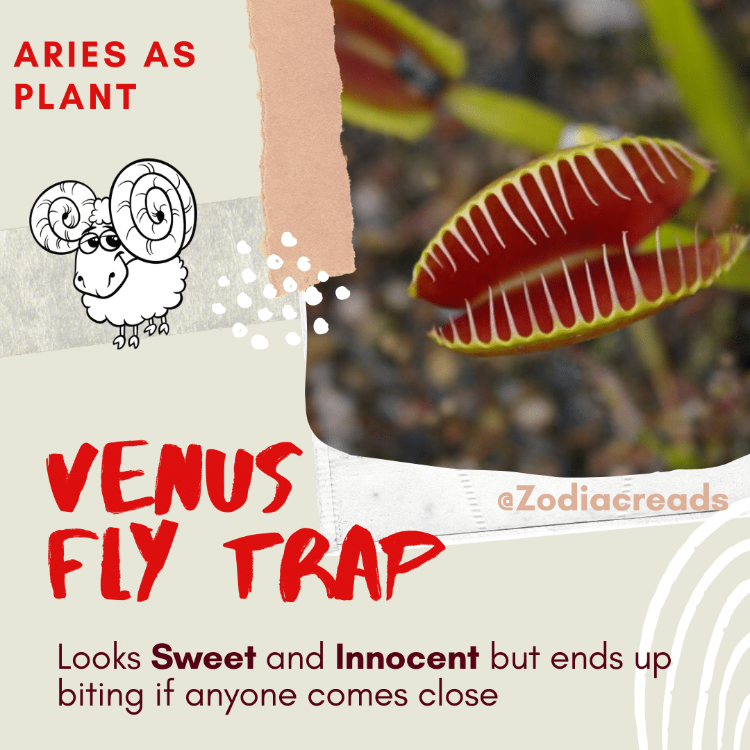 ARIES-Signs-as-Plants-Zodiacreads